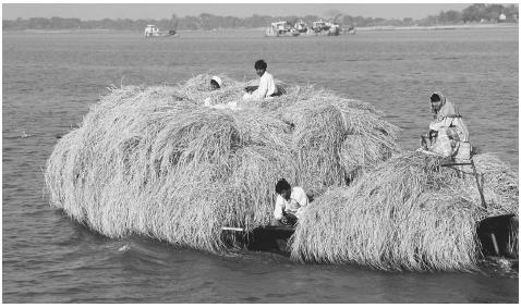 Transporting straw on the Ganges River Delta. The majority of Bangladeshi, about 75 percent, are agricultural workers.