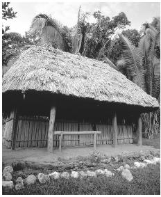 The exterior of a healer's hut, Panti Maya Medicinal Trail. Most people go to Mexico or Guatemala for Western medical treatment.