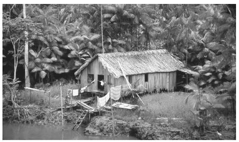 A house on the edge of the Amazon River. The Amazon forest is estimated to contain 15 to 30 percent of all species on earth.