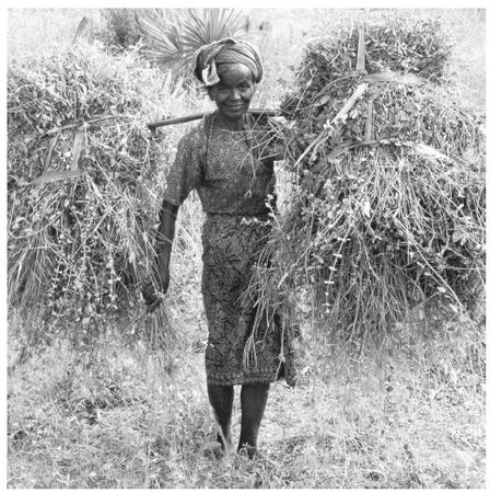 A woman carrying grasses in Maymio, Burma. Women had high status in traditional society, which has been lessened today by the militaristic government.