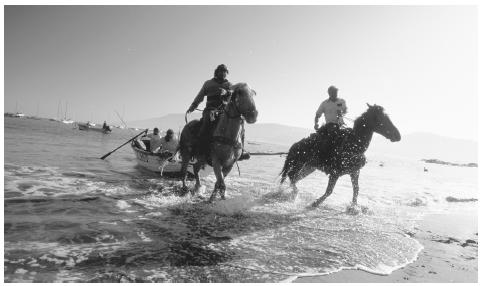Horses pull fishing boats with the morning catch onto a beach in Papudo.