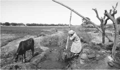 A man collecting water from the Dakhla Oasis. Payment for water use is indirect, with fees generated as a land tax by larger farmers.