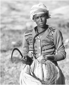 An Eritrean woman harvesting Teff in Geshinashim. The Eritrean economy is totally dependent on agriculture.