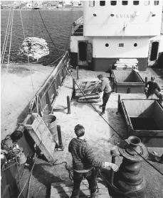 Unloading a catch of salt cod in the Faroe Islands. Fish and fish products are the country's chief exports.