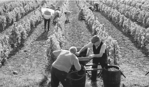 Men working at a vineyard in France. French wine is a source of national pride and an important part of both simple and elaborate meals.
