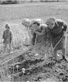 Women hoeing fields near Gori. There is no explicit division of labor by gender in Georgia, except for hard physical labor, such as mining.