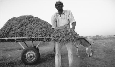 A peanut harvester in Bissau. These nuts, along with cashews and palm nuts, are among Guinea-Bissau's chief exports.