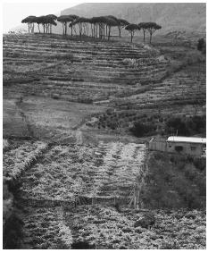 Agricultural fields occupy a stretch of countryside. Lebanon produces and exports much of its agricultural produce.