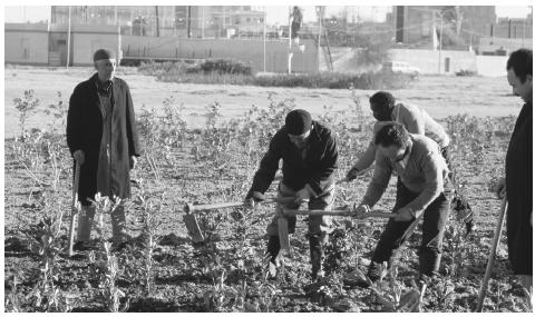 Libyans tending an urban vegetable patch.