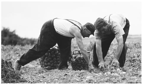 Two men harvest potatoes on a farm. Luxembourgers place a high value on owning property and protecting property rights.