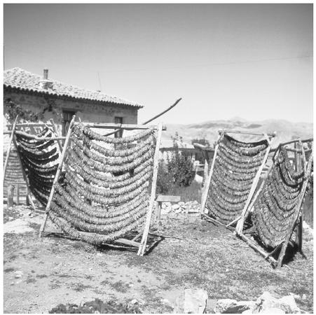 Drying tobacco in a Macedonian village. Although the nation is now industrialized, tobacco continues to be a major cash crop in Macedonia.