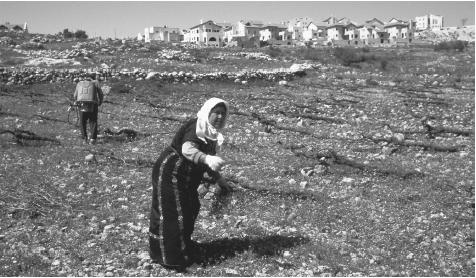 Palestinians farming land near Efrata, West Bank. Agruculture is the foundation of the Palestinian economy, especially in the northern part of the West Bank.