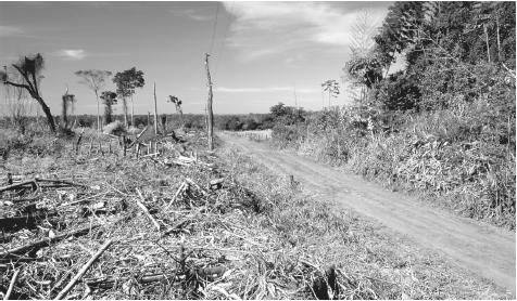 A forest cleared for farming in eastern Paraguay.