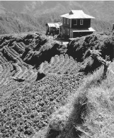 A farmhouse overlooks vegetables growing on a terraced field. In these volcanic islands, mountains are common.