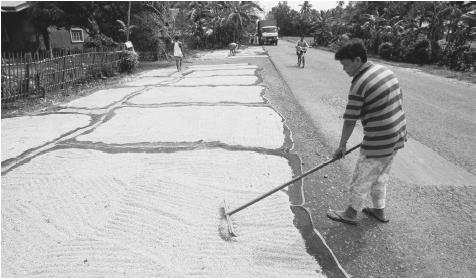 Workers spread rice on palm mats to dry in the midday sun. Filipinos do not consider a meal complete without rice.
