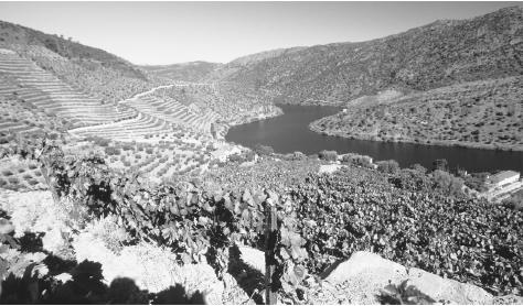 Vineyards above the upper Douro River. This region produces port, a major export.