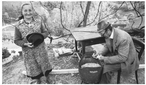 A Slovenian peasant removes corn from the dried cobs while his wife holds his new hat. Clothing is one sign of Slovenia's new affluence; the country has one of the strongest economies among the formerly socialist East European nations.