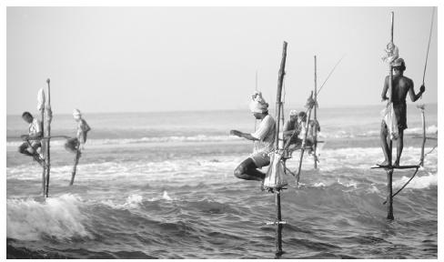 Stilt fishermen in the waters near Weligama, Sri Lanka. Fish are a large part of the Sri Lankan diet.