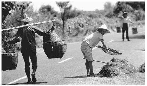 Farm workers carrying and sifting rice on a street in Taiwan. Rice is a major agricultural product.