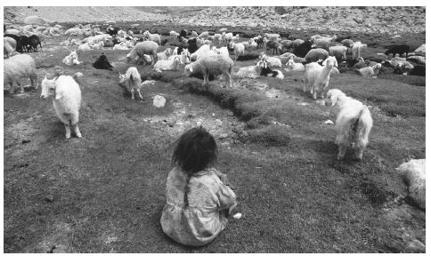 A Tajik girl watching over goats in the Pamir Mountains.