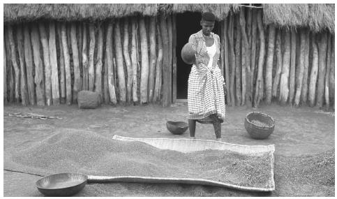 A woman winnowing grain in the Virunga National Park. More than 80 percent of the workforce is employed in agriculture.