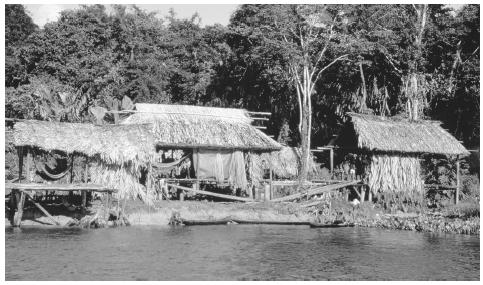 Thatched huts along the shore of a river. This type of dwelling is home to the indigenous peoples of Venezuela.